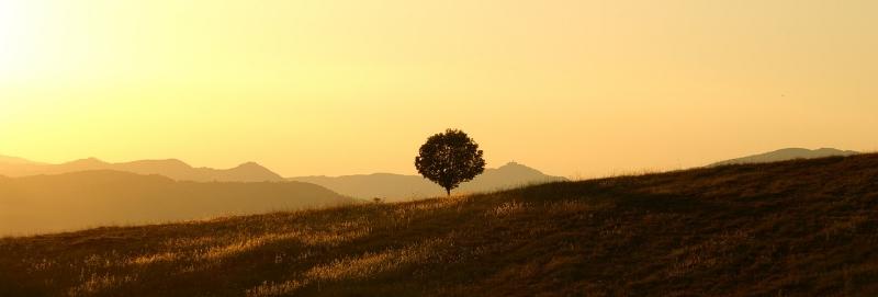 tree-189852_1280-846580-edited