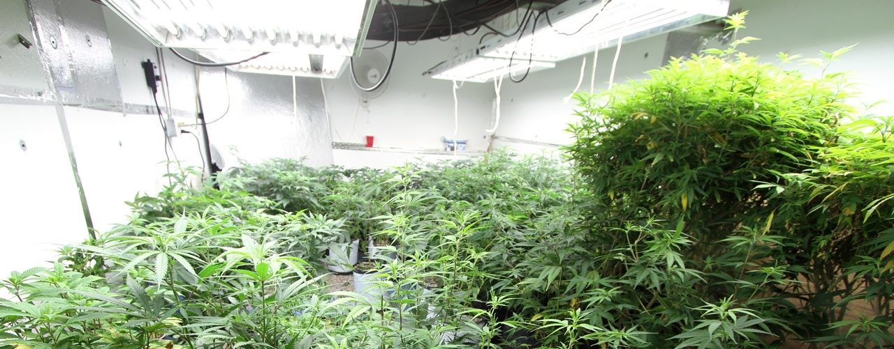 marijuana-hyrdorponic-utilities-power-673942-edited.jpg