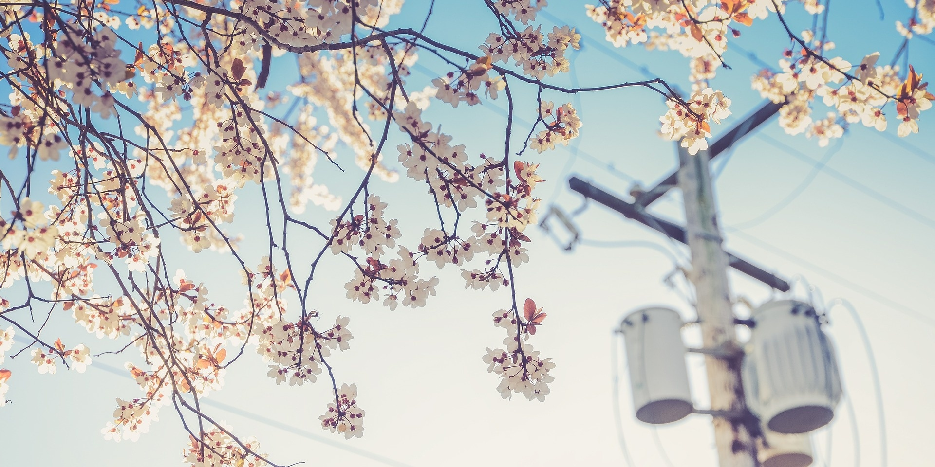 powerlines-flowers-240671-edited.jpg